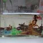 filament de sel de manganèse